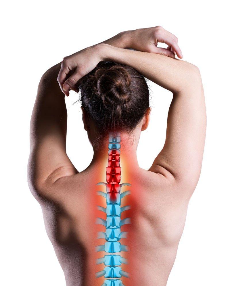 spina-dorsale